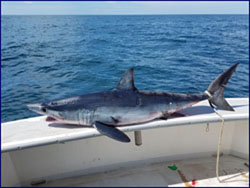 Fishing with Bluefin Charters out of Falmouth, MA